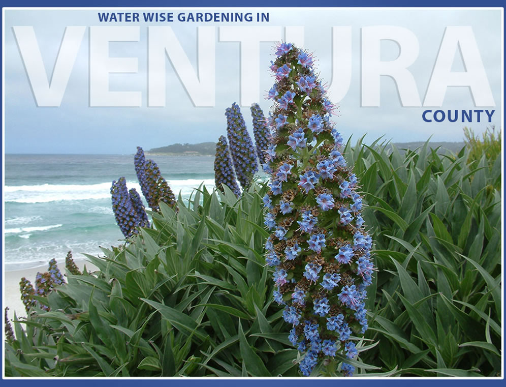 1483679110Venturacountygardening website