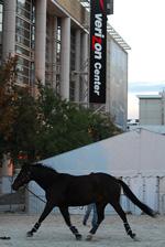 horse walking outside Verizon Center in Washington, DC