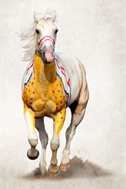 fine art photography of American Indian horse