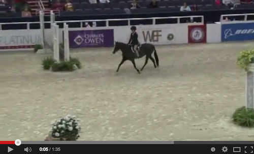 Watch Caroline Passarelli and Little Black Pearl in their winning round! Video courtesy of Shownet.biz.